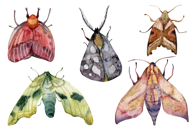 Watercolor different exotic multicolored butterflies moths set isolated on white background