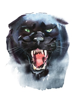 Watercolor drawing of angry looking panther. animal portrait on white