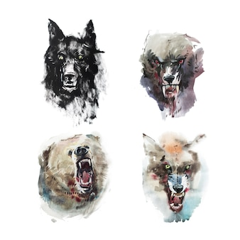 Watercolor drawing of angry looking wolfs and bear. animal portrait on white background.
