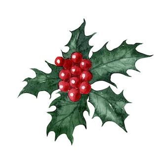 クリスマスの花ホリーを描く水彩画
