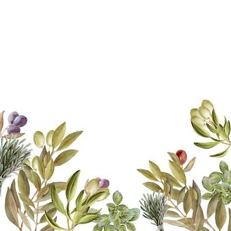 葉、果物、オリーブオイルの水彩描画フレーム。オイルとハーブ