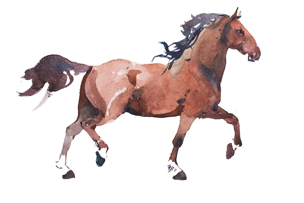 Watercolor drawing of jogging horse