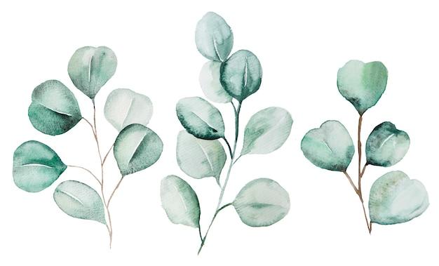 수채화 eucaliptus 나뭇잎 설정된 그림. 편지지, 초대장, 인사말 카드, 로고, 패턴, 스티커 요소