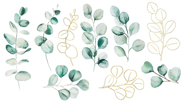 Watercolor eucaliptus leaves set illustration. elements for stationery, invitations, greeting card, logos, patterns, stickers