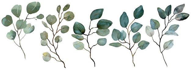 水彩ユーカリコレクション。春の緑。結婚式の花のイラスト。ナチュラルブランチセット。装飾的な美しいエレガントなイラスト