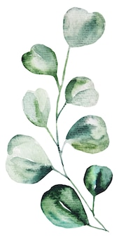 Watercolor eucalyptus leaves set illustration. elements for stationery, invitations, greeting card, logos, patterns, stickers