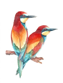 Watercolor european bee eater.