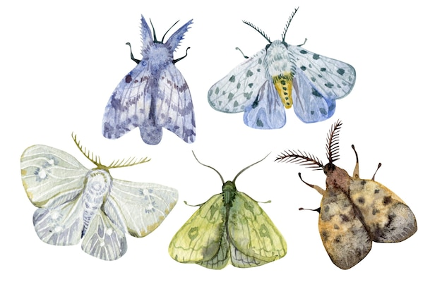 Watercolor exotic multicolored butterflies and moths set isolated on white background