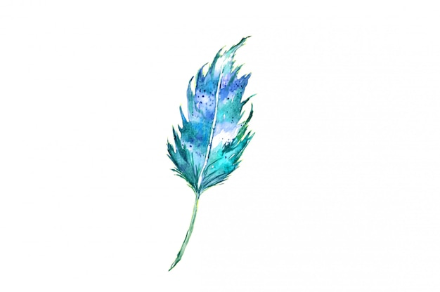 Watercolor feather of a bird on white