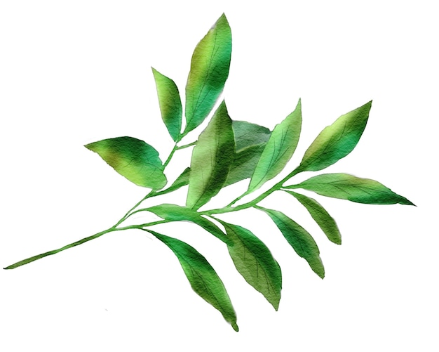 Watercolor floral illustration with tropical green leaves for designer use in cards and other printed materials