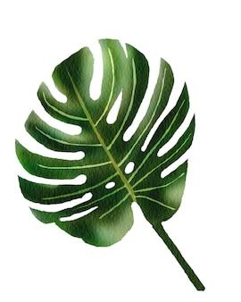 カードやその他の印刷物でデザイナーが使用するための熱帯の緑の葉と水彩花のイラスト