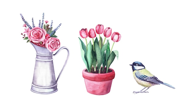 Watercolor flower arrangement in a vintage metal pitcher, tit bird and tulips in pot. chickadee illustration isolated on white. bouquet with roses, lovanda. farm and garden interior decoration