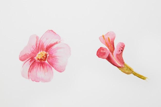 Primo piano del disegno del fiore dell'acquerello