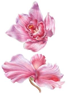 수채화 꽃. 난초. 시클라멘. 삽화. 손으로 그린.