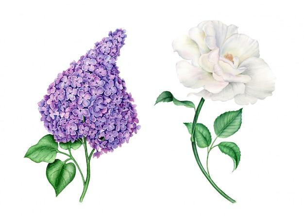 Watercolor flowers set vintage botanical illustration