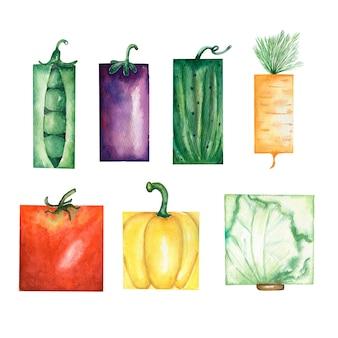 Watercolor garden vegetables set