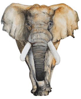 Watercolor gray elephant