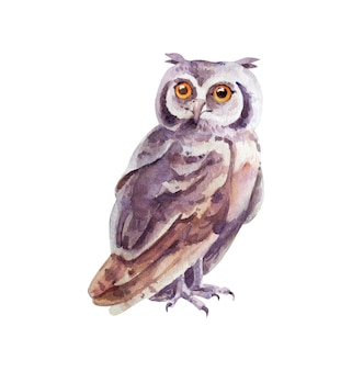 Watercolor gray owl on white background