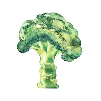 水彩グリーンブロッコリー