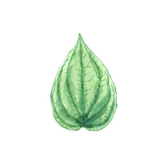 水彩緑の葉