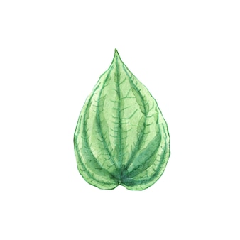 Watercolor green leaf