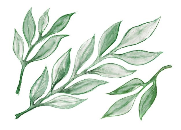 水彩画の緑の葉と小枝のコレクション。水彩ユーカリの枝、水族館の緑、白で隔離の植物要素
