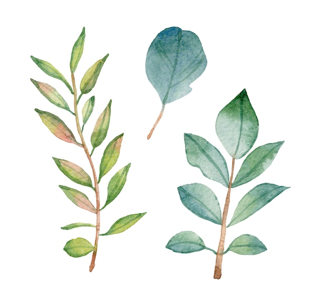 Watercolor green leaves isolated