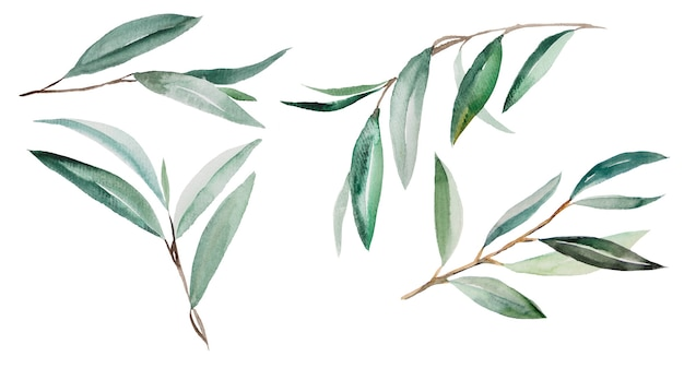 Watercolor green olive branches illustrations