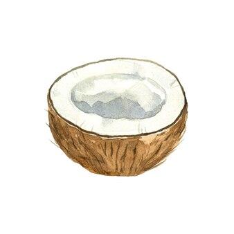 白で分離されたココナッツの水彩画の半分