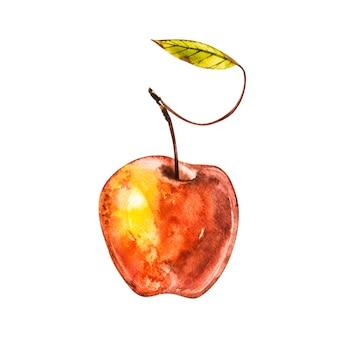 水彩の手描きのリンゴ。白の分離自然食品フルーツイラスト