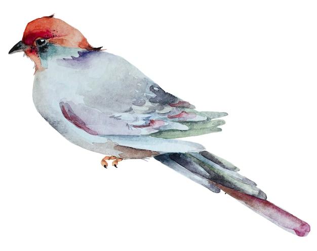 白い背景に分離された水彩画の手描きの鳥。
