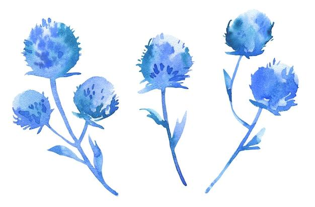 Watercolor hand drawn blue eryngium planum set isolated on white. wild field herb