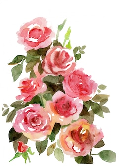 Watercolor hand drawn bouquet of tender pink roses.