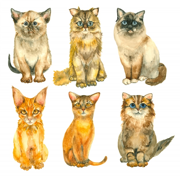 Watercolor hand drawn cats