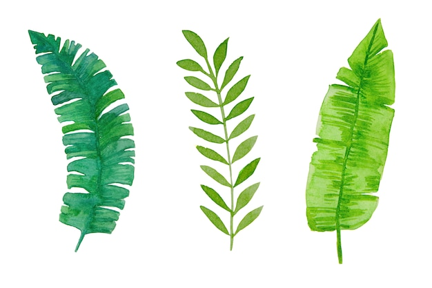Watercolor, hand-drawn green tropical leaves on white background.