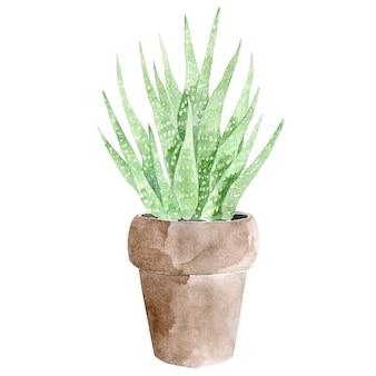 水彩手描き観葉植物
