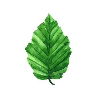 水彩手描きイラスト。緑の新鮮な葉。