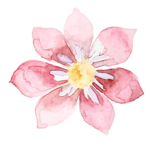 Watercolor hand drawn pink flower isolated on white background