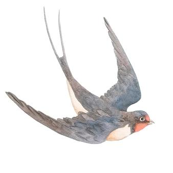 Watercolor hand drawn swallow