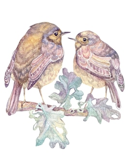 Watercolor hand drawn two cute birds on oak branch with leaves isolated on white background