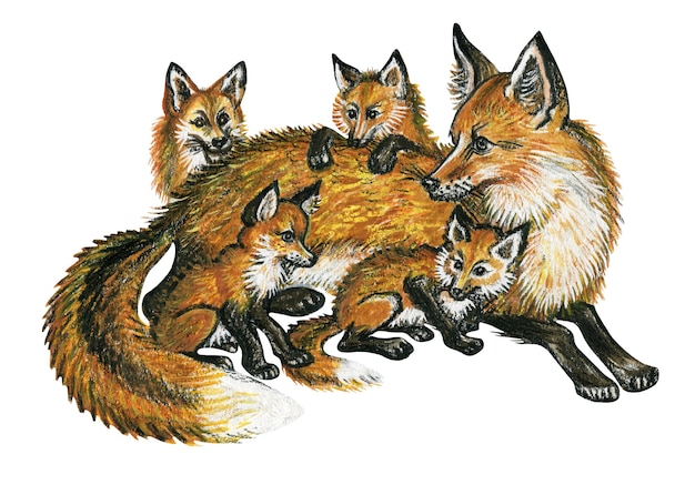Watercolor hand drawn wild animals fox with little foxes illustration isolated on white background