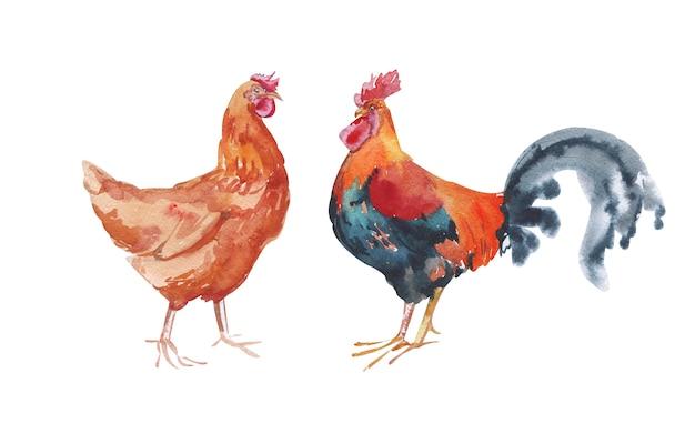 Акварель ручная роспись цыплят, изолированные на белом фоне
