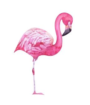 수채화 손으로 그린 핑크 플라밍고 흰색 절연