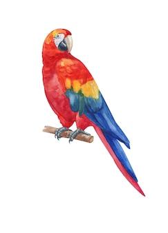 Акварель ручная роспись радуга ара попугай, изолированные на белом