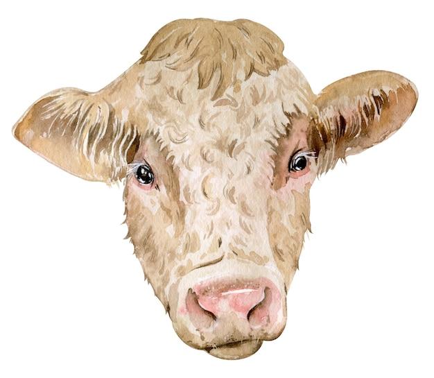 分離されたシャロレー牛の水彩画の頭