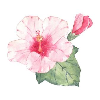 수채화 히비스커스 꽃 흰색 절연