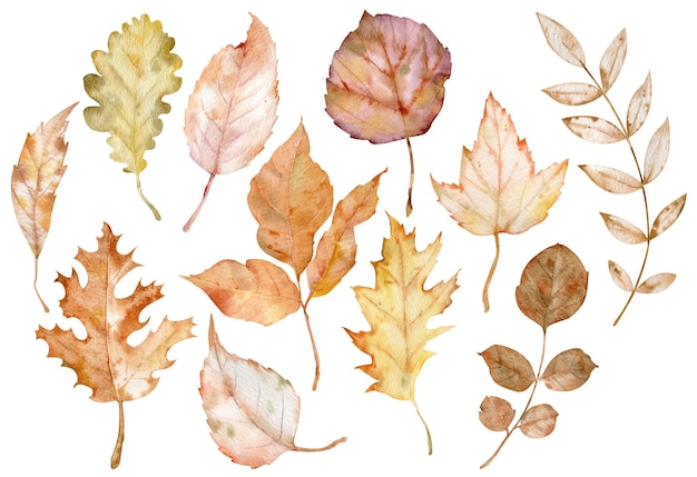 Watercolor illustration of autumn leaves isolated on the white background. botanical art. fall clipart. herbarium collection