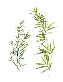 Watercolor illustration of bamboo leaves