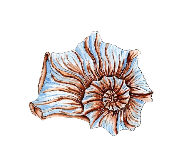 Watercolor illustration of a beautiful twisted seashell in beige and blue colors underwater world