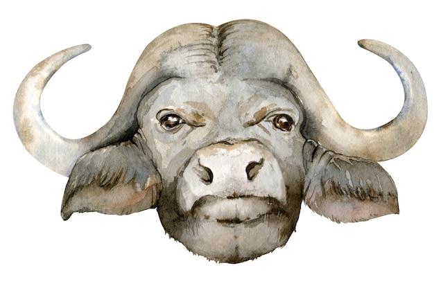 Watercolor illustration of black african buffalo head.